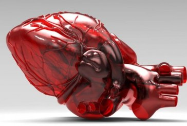 Presto potremmo avere un cuore funzionante, in 3D