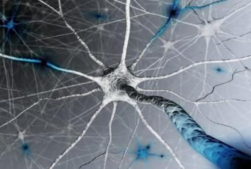 Le cellule che aiutano a capire il dolore