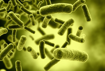 Un batterio diventa una fabbrica di biocombustibili