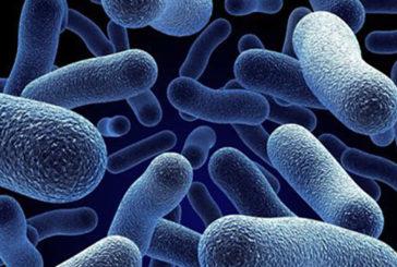 Approda il batterio più 'veloce' del mondo