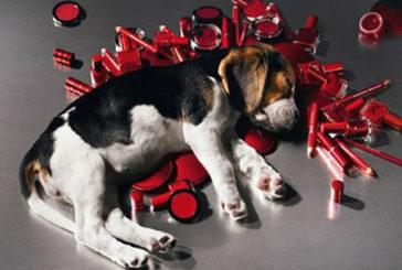 Corte Ue dice no ai cosmetici testati sugli animali
