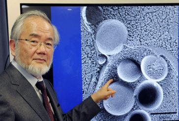 Nobel per la Medicina al giapponese Yoshinori Ohsumi