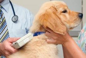 Ats Sardegna – Iscrizioni all'anagrafe canina: le date di agosto