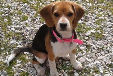 Pet therapy all'Irccs Inrca di Ancona