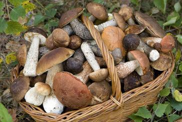 Raccoglitori funghi: consulenza gratuita Ispettorato micologico