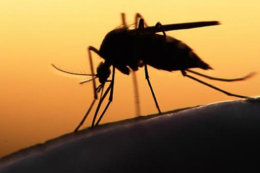 Zika, un anticorpo blocca infezione in feti e adulti