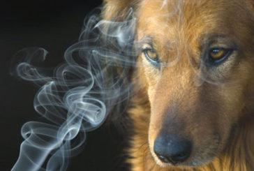 Fda: rischi da fumo passivo anche per cani e gatti