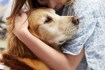 Lombardia: via libera ad animali da compagnia in ospedali
