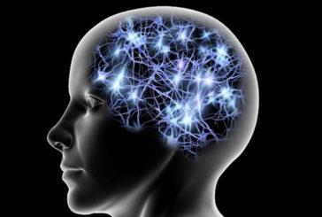 Ogni tipo di personalita' ha una forma diversa del cervello