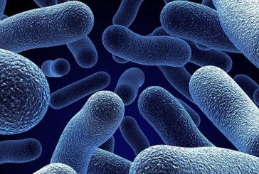 """Si studia il """"flash mob"""" dei batteri per il futuro dei robot"""
