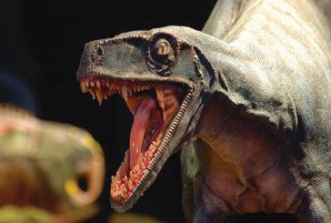 Distinguere il sesso dei dinosauri diventa un enigma