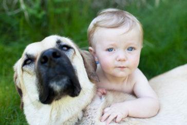 Un animale da compagnia diminuisce lo stress nei bambini