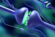 Serotonina, la molecola della felicità che aiuta a preservare cervello