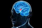 Individuata nel cervello la 'centralina' che controlla l'invecchiamento