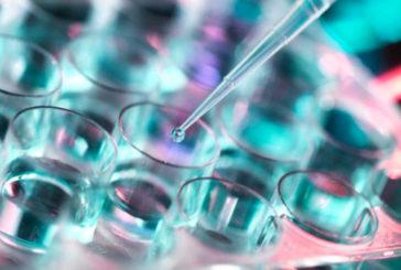 Due molecole immunoterapiche efficaci contro tumori rene e stomaco