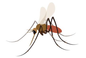 Zanzare e pappataci: la cosa più importante è proteggersi