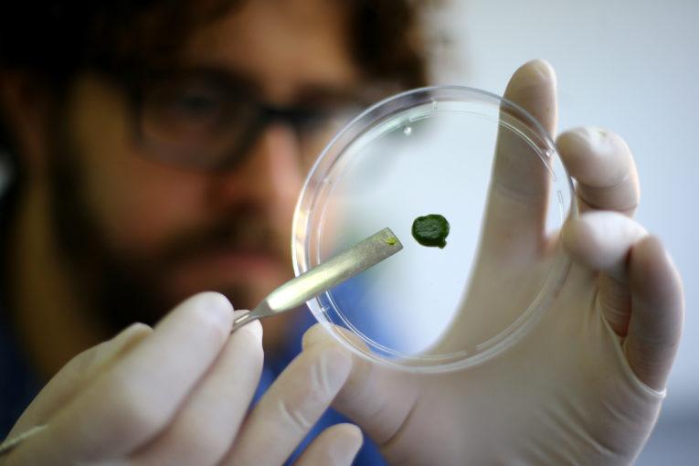 Pelle rigenerata grazie alla fotosintesi