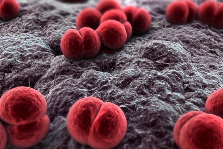 Batterio meningococco - Isolato in pediatria a Fiorano