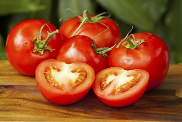 Arriva il super pomodoro contro l'invecchiamento e i tumori