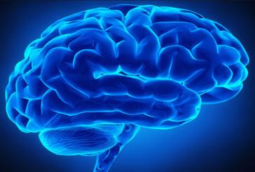 Il cervello si può fossilizzare
