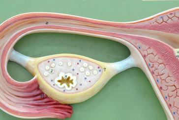 Arriva in Usa il trapianto di utero