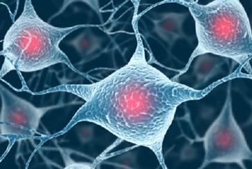 L'Alzheimer potrebbe essere causato dal sistema immunitario