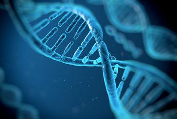 I caratteri fisici dell'uomo hanno continuato a evolversi negli ultimi 2.000 anni