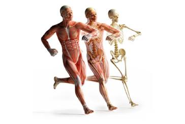 Maratoneti: più si corre, più le ossa si rinforzano