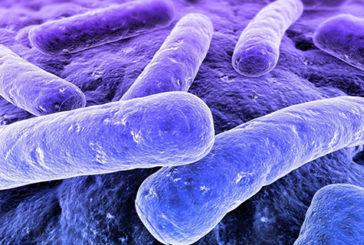 """La colite ulcerosa """"curata"""" da trapianto di flora batterica"""