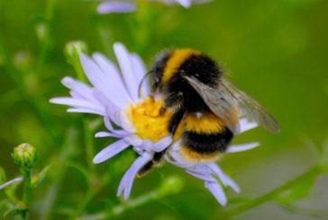 8 su 100 hanno reazione allergica a punture di vespa e calabroni