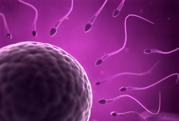 Trovato il gene degli spermatozoi