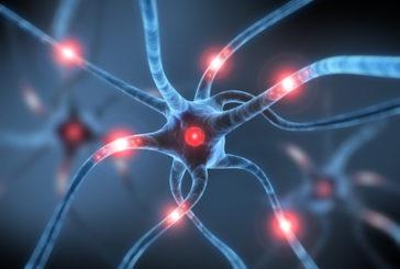 Individuate le cause genetiche della sclerosi multipla