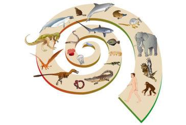 Dopo la fine dei dinosauri, l'evoluzione dei mammiferi è stata velocissima