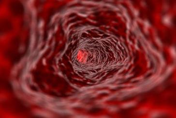 Silenziato il gene nemico di vene e arterie