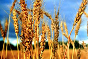 Attraverso il Dna individuata l'origine dell'agricoltura