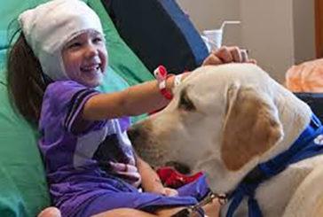 Da settembre cani 'fisioterapisti' in corsia. Progetto approvato dalla Asl 3