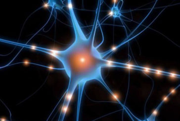 Anche il cervello ha i suoi 'fusi' orari