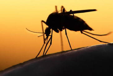 A Miami, test a tappeto per allarme Zika