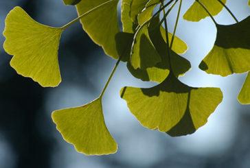 Da sei piante gli estratti dell'anti-aging
