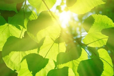 Le piante esperte nel risparmio energetico