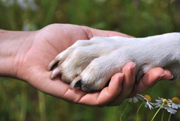 Il cane è il miglior amico dell'uomo grazie a cinque geni