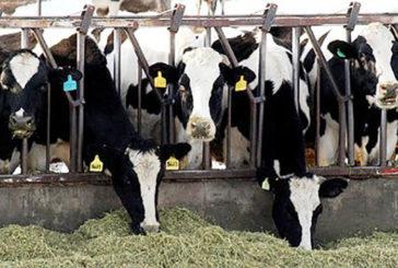 Nuoro: controlli sanitari per tubercolosi bovina