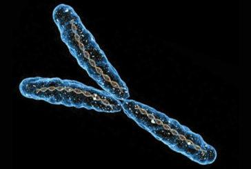 Si può essere ancora maschi anche senza cromosoma Y