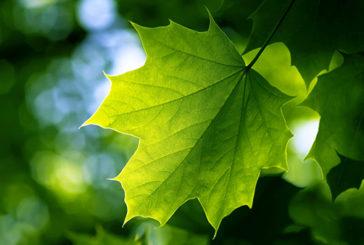Manipolata la fotosintesi clorofilliana