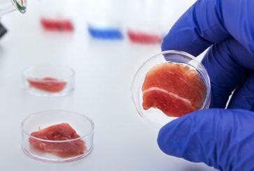 Più facile 'coltivare' organi in miniatura in laboratorio