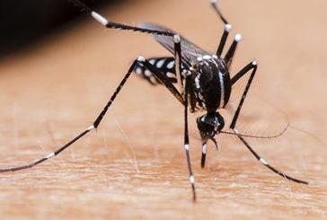 Oms: dopo 9 mesi Zika non è più emergenza internazionale
