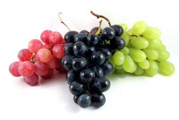 Dieta ricca di uva arma in più contro Alzheimer