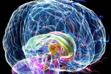 In un gene del cervello il segreto del multitasking