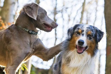 Jack e Lola, cani 'terremotati' nuova terapia per malati cardiopatici