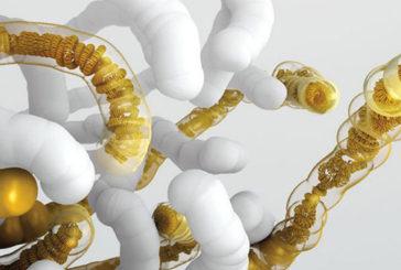 Vicino il primo genoma sintetico, è il Dna del lievito